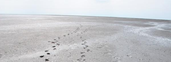Fußabdrücke im Watt