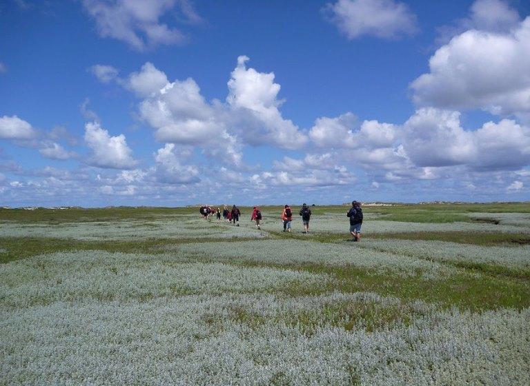 Salzwiesen Norderney